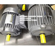 Teco Electric Motor - Induction Motor 3 Phase