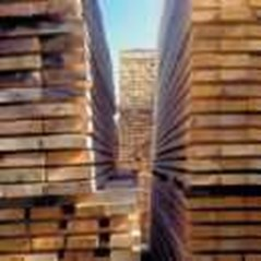 Kayu Log & Sawn Timber