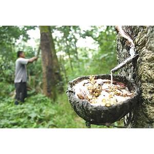 Daftar Perusahaan Jual Hasil Hutan Murah | Indonetwork