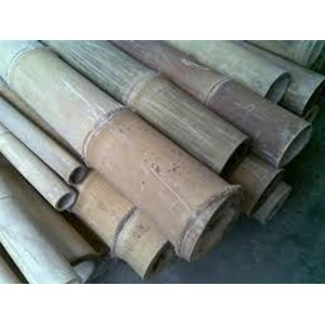 List of Companies Selling Petung Bamboo - Latest Prices 2021 | Indonetwork