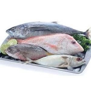Daftar Perusahaan Jual Ikan Laut - Harga Terbaru 2021 | Indonetwork
