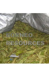 west borneo resources
