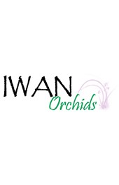 IWAN ORCHIDS