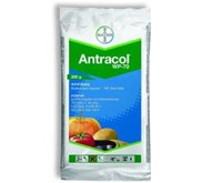 Insectisida Antracol 70 WP