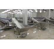 Conveyor Filleting Udang - Shrimp Filleting conveyor