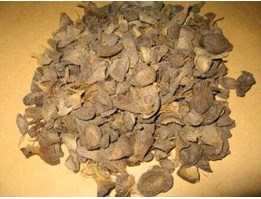 Jual Palm Kernel Shell