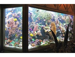 Jual Aquarium Di Indonesia Agen Distributor Supplier
