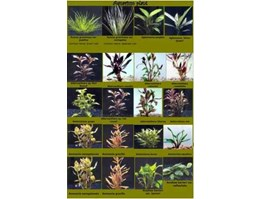 Jual Tropical Freshwater Fish & Aquatic Plant
