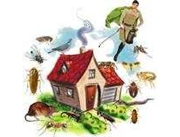 General treatment Monitoring IPM - Cockroach - Bee & wasp - Free larva - Rodent Control Mining area
