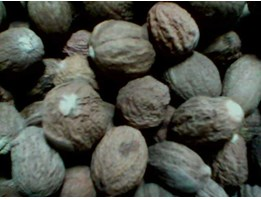 Jual NUTMEG SHRIVELS