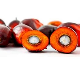 Jual Sell Crude Palm Oil - Belawan Dumai Jambi