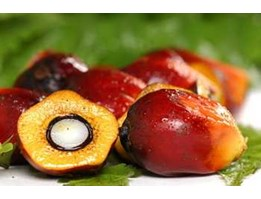 Jual Sell Crude Palm Oil - Kalimantan