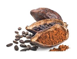 Jual Cocoa extract / Chocolate Extract