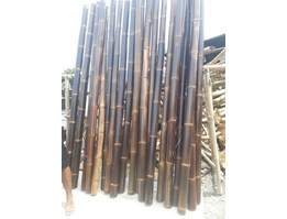 Big Blackbamboo Polished