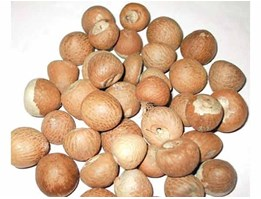 Sell Betel Nut from Tana toraja Indonesia