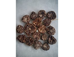 dried noni fruits / mengkudu kering