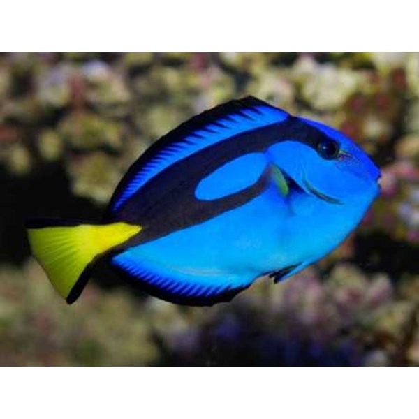 marine aquarium fish and invertebrates