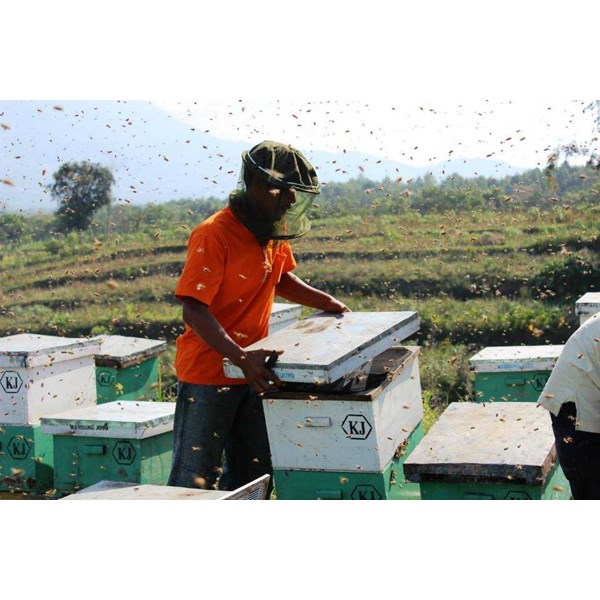 madu asli honey house-1